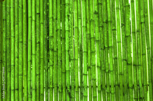 Various bamboo trees with natural colors #297718444