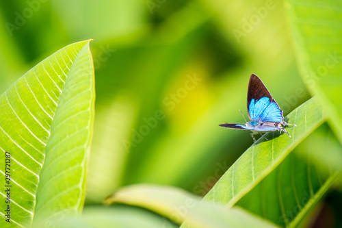 Beautiful blue butterfly sitting on leaf in flower garden. Canvas Print