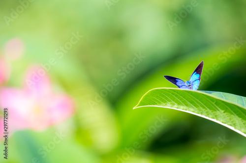 Valokuva Beautiful blue butterfly sitting on leaf in flower garden.