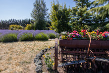 Garden With Large Cart Of Bright Flowers