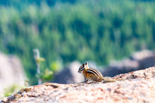 Chipmunk At The Summit Of Moun...