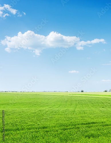 Foto auf Gartenposter Himmelblau green grass agriculture field and blue sky with clouds over it