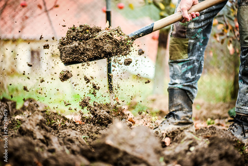 Stampa su Tela Worker digs soil with shovel in colorfull garden, workers loosen black dirt at farm, agriculture concept autumn detail