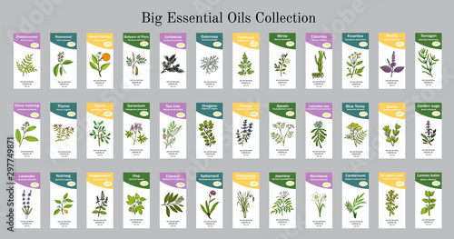 Fototapeta Big set of essential oil labels obraz