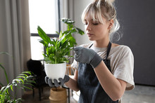Young Woman Caring For Houseplants In Loft Interior