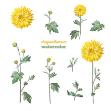Yellow Chrysanthemum With Leav...