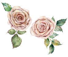 Watercolor Pink Roses And Leaves Card. Hand Painted Floral Composition With Flowers And Leaves Isolated On White Background. Botanical Vintage Illustration For Design, Print Or Background.
