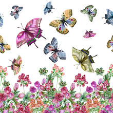 Beautiful Tulip-flowered Pelargoniums Flowers With Green Leaves And Flying Butterflies On White Background. Seamless Floral Pattern, Border. Watercolor Painting. Hand Painted Illustration