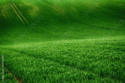 Foto op Plexiglas Groene Green grass field background