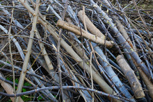 Heap Of Cutting Branches And Twigs
