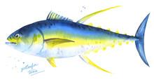 Yellowfin Tuna. Hand Drawn Wat...