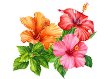 Bouquet Of Beautiful Hibiscus Flowers On A White Background, Watercolor Illustration, Greeting Card