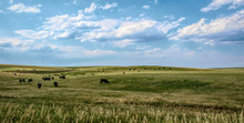 Rural Landscape In Colorado, U...