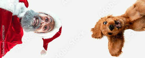 Happy Christmas Santa Claus with little doggy on white studio background. Caucasian male model in traditional costume. Concept of new year's, winter mood, gifts. Crazy happy, calling to celebrate. © master1305