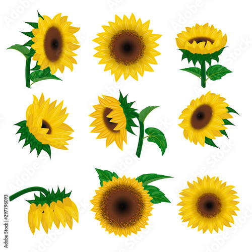 Pinturas sobre lienzo  Sunflower vector yellow summer flower nature, flower and floral blossom plant il