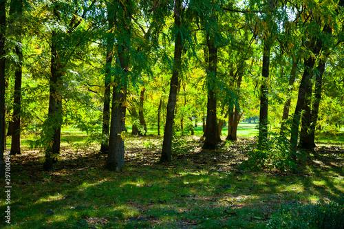 Autocollant pour porte Route dans la forêt Park on a sunny day.
