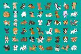 Fototapeta Fototapety na ścianę do pokoju dziecięcego - Different type of vector cartoon dogs for design.