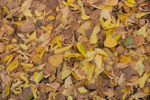 Canvas Print Bright and colorful fallen leaves on the ground from above
