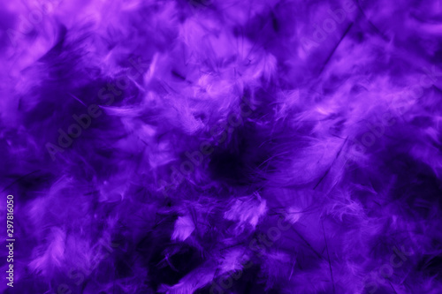 Beautiful abstract blue and purple feathers on darkness background and colorful soft white pink feather texture pattern - 297816050