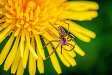 Macro Shot Of Insects And Plants, North Of Italy