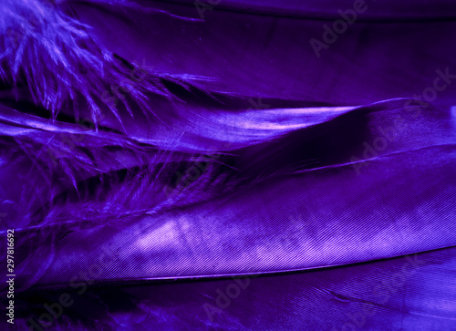 Beautiful abstract pink and purple feathers on darkness background and colorful soft white blue feather texture pattern - 297816692