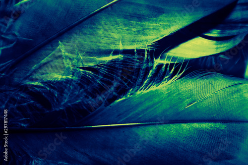 Beautiful abstract white and green feathers on darkness background and colorful soft pink light green and white purple feather texture pattern