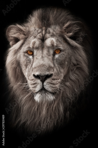 Fototapety, obrazy: Powerful  and confident maned male lion with yellow (amber) eyes resembling a king imposingly. portrait in isolation, black background. bleached photo, colored yellow eyes.  white photo,