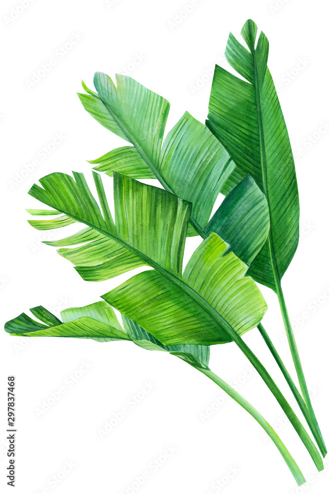 Fototapety, obrazy: tropical palm leaves on white background, watercolor illustration
