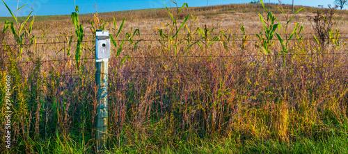 Obraz na plátne Bluebird Box on Fence Post