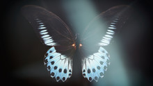 Colored Butterfly On A Black Background With A Beautiful Glow.
