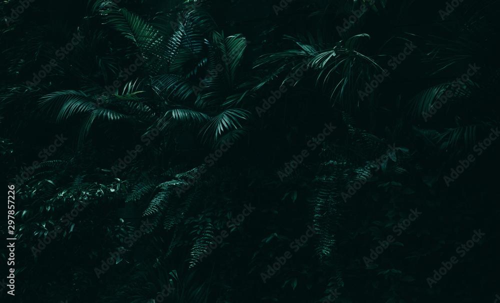Fototapety, obrazy: Tropical leaves background,jungle leaf garden