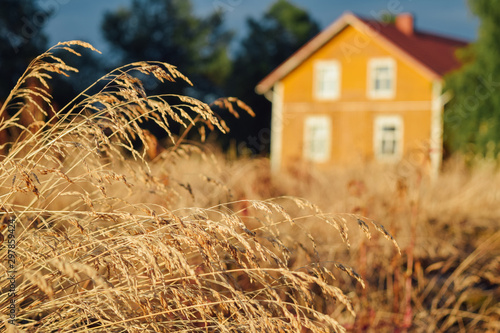 Beautiful finnish yellow farm house at blurred background warm summer evening at Canvas