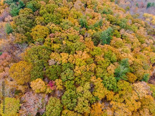 Fotografie, Obraz Drone photo of peak foliage upstate New York during the autumn fall season
