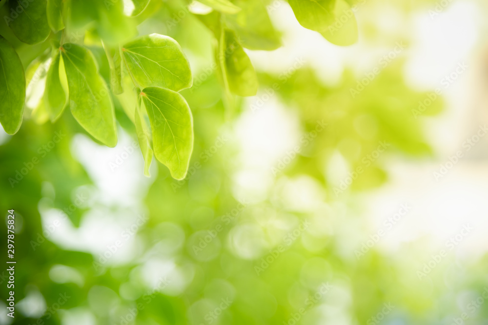 Fototapety, obrazy: Close up of nature view green leaf on blurred greenery background under sunlight with bokeh and copy space using as background natural plants landscape, ecology wallpaper concept.