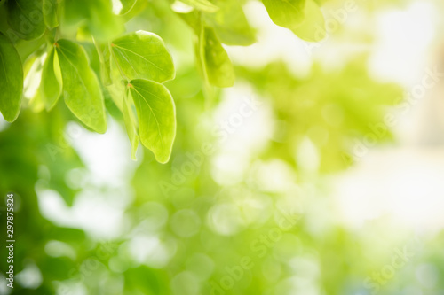 Poster Printemps Close up of nature view green leaf on blurred greenery background under sunlight with bokeh and copy space using as background natural plants landscape, ecology wallpaper concept.