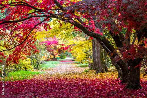 Foto op Canvas Bordeaux alley in the park with colorful leaves