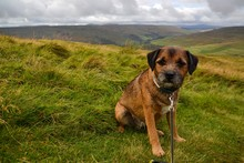 Terrier Dog On Grass In Yorkshire Dales