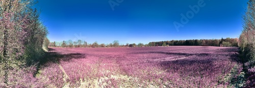 Fotobehang Kersenbloesem Beautiful pink infrared landscape panorama with a deep blue sky in high resolution