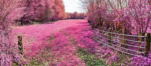 Fotobehang Candy roze Beautiful pink infrared landscape panorama with a deep blue sky in high resolution