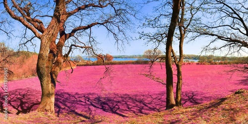 Wall Murals Candy pink Beautiful pink infrared landscape panorama with a deep blue sky in high resolution