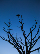 Silhouette Of A  Bird Perched ...