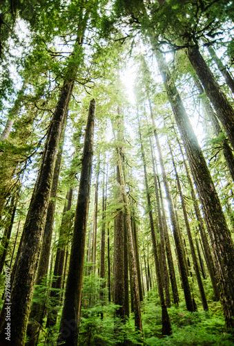 Landscape of Olympic Peninsula National park, Washington, United States - 297898679