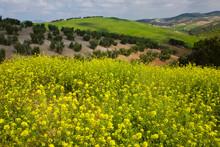 Springtime, Landscape In Sierra Norte De Sevilla, Sierra Morena, Sevilla, Andalusia, Spain, Europe