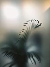 Window Plant