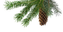Isolated Image Of Fir Branches...