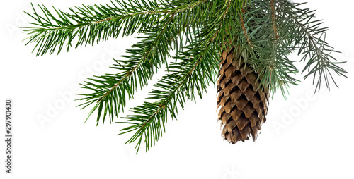Pinturas sobre lienzo  Isolated image of fir branches with a cone on a white background