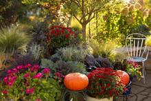 A Fall Gardenscape Boasting Cool Weather Plants, Pumpkins, Mums, Ornamental Cabbage,  Hakuro-nishikia Japanese Willow And Ornamental Grasses