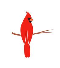 Cardinal Bird Logo. Isolated Cardinal Bird On White Background