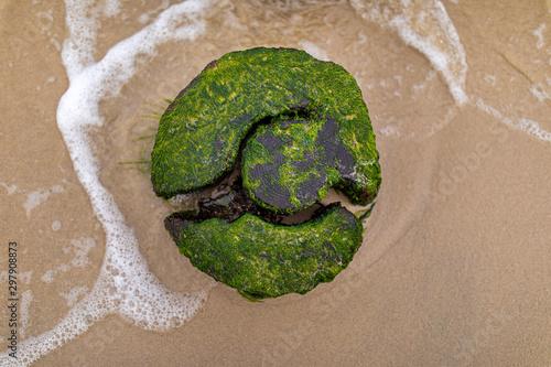 Photo  Draufansicht eines Holz stumpfes im Sandstrand, Rügen, Deutschland 2