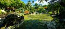 Beautiful Botanical Garden - J...